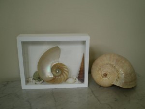 Shell Shadow Box Frame