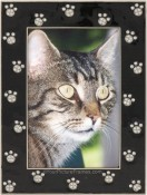 Black Jeweled Cat Paws Picture Frame