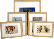 Set of 7 Natural Matted Gallery Picture Frames